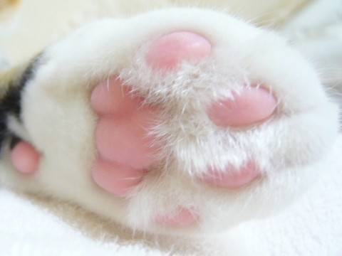 White Cat Pink